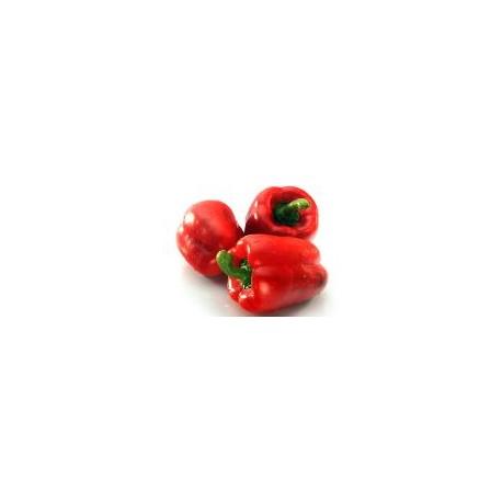 Pimiento Rojo Bio